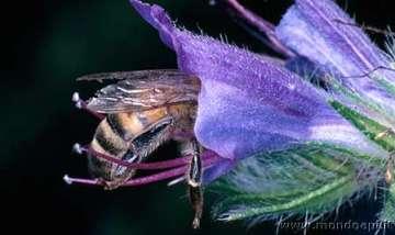 Visita la fotogalleria sulle api
