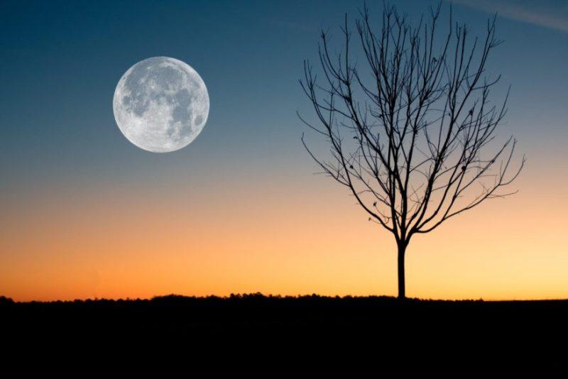 Calendario Con Fasi Lunari 2020.Il Calendario E Le Fasi Lunari 2020 Effetti Sulla Donna