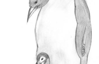 Il Pinguino Imperatore, un uccello che non vola