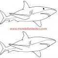 trova le 5 differenze lo squalo