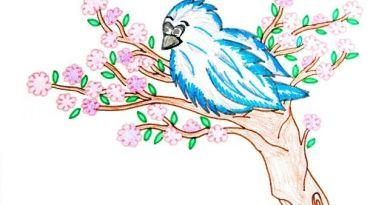 Uccellino Azzurro di Montagna