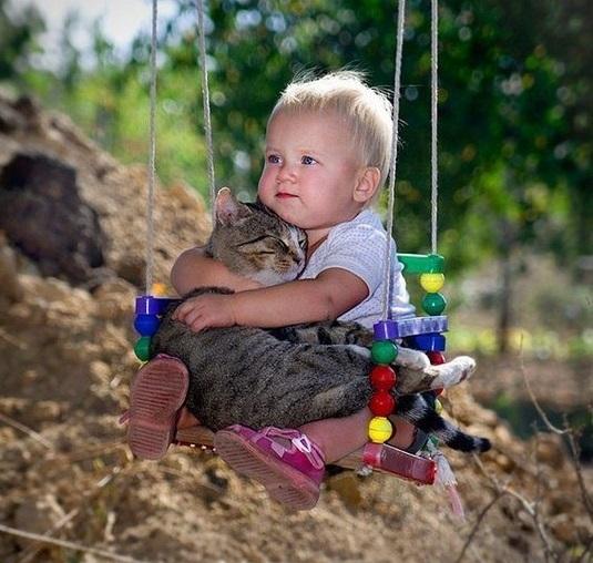 Crescere un gattino