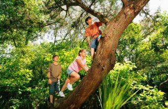 Come arrampicarsi su un albero, un'avventura all'aperto