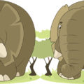 trova le cinque differenze sull'elefante