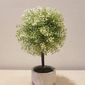 vaso con alberino verde