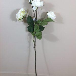 rosa bianca