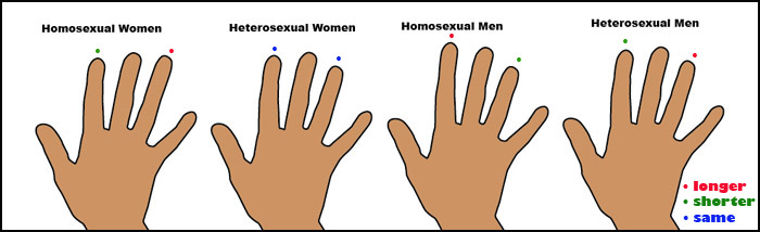 Digit ratio and sexual preference.
