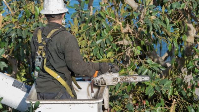 Tree Trimmer Helmet Cutting Branches