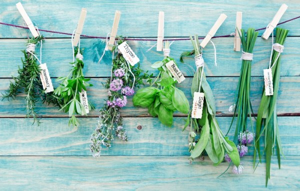 Selection of fresh herbs pegged on a string