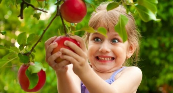 Little girl excitedly picking an apple