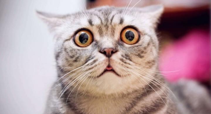 Cat looking surprised