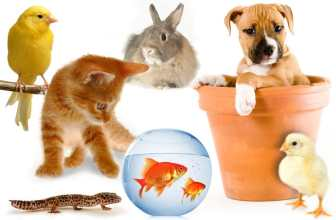 Different pets - dog, cat, fish, bunny
