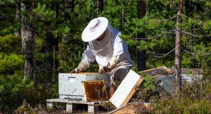 Make Money Beekeeping