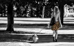 moneymagpie_dog-walk