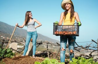Make money fruit picking this Summer