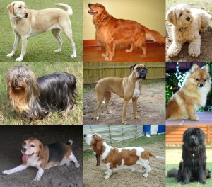moneymagpie_dog-breed-collage