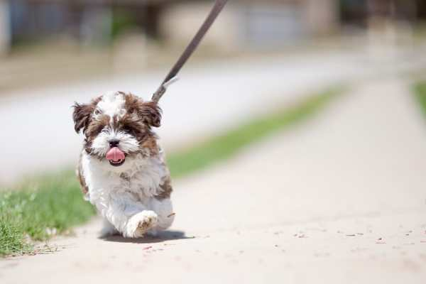 Dog on a lead
