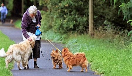 Why a dog walking business is the ideal start up...
