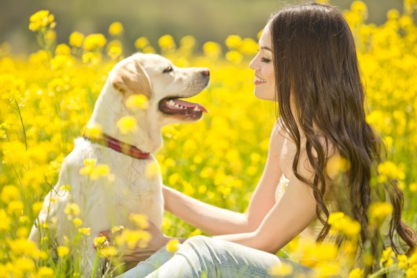 Woman in summer field with golden labrador