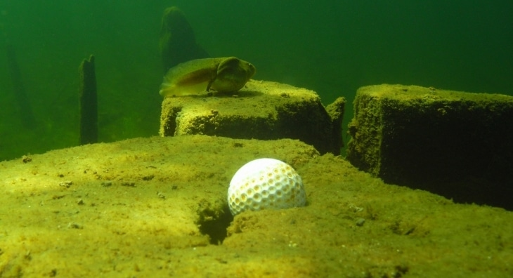 golf ball in lake