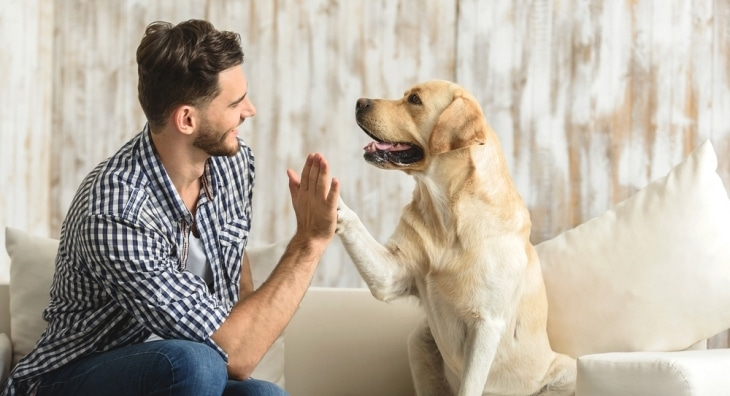 Dog and man high fiving