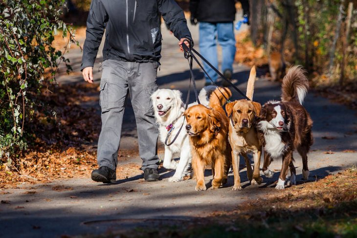 HOw to make money as a dog walker