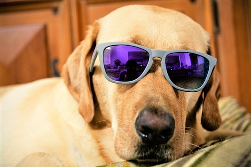 8 exciting ways to make money as a dog lover
