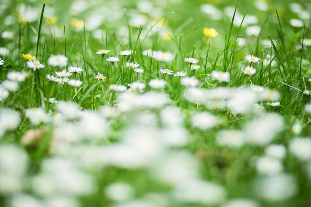 grow a lawn