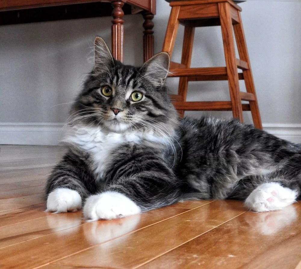 pet friendly floor