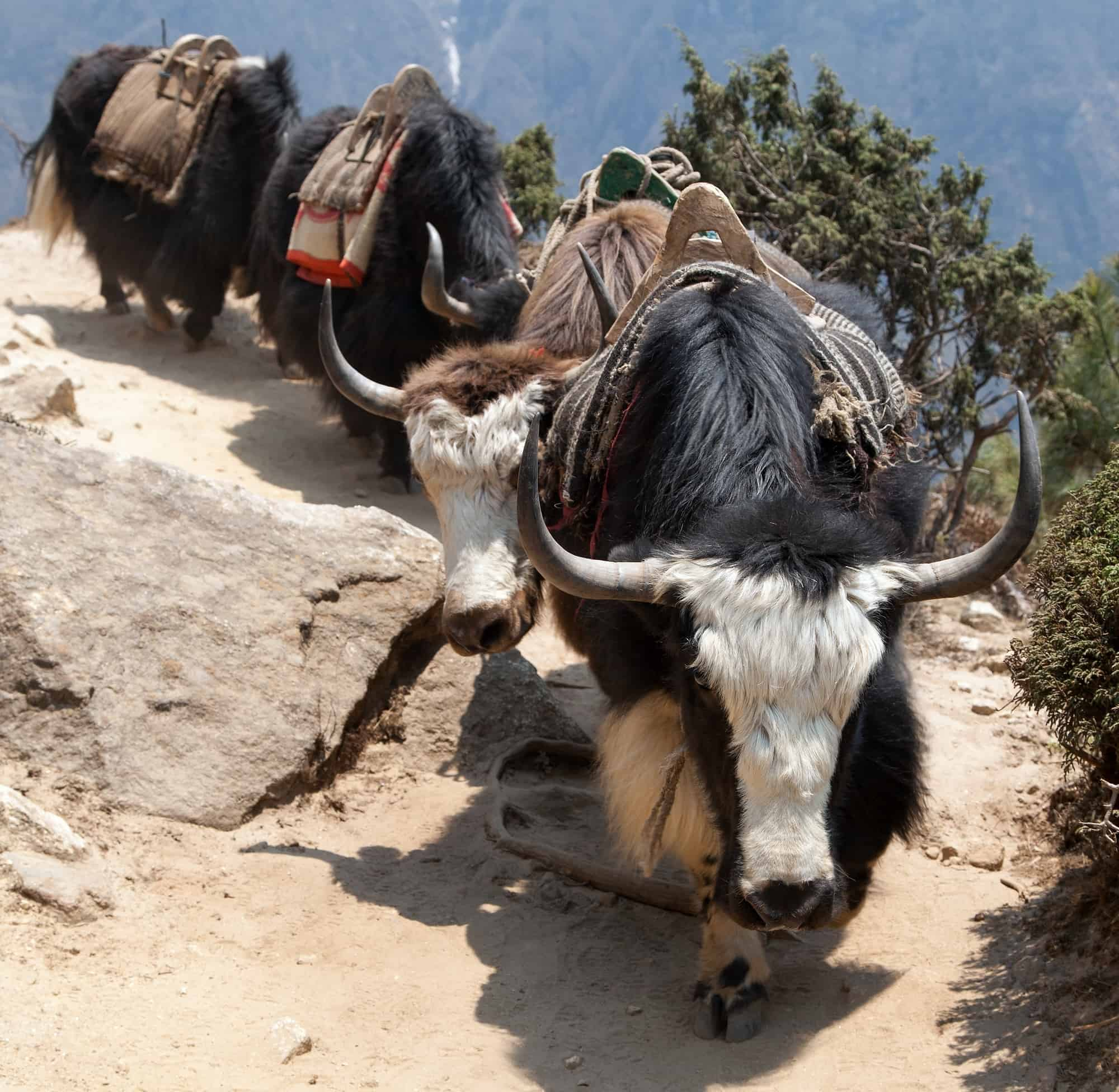 Yaks And Yetis Exploring Everest For Kids Through Books