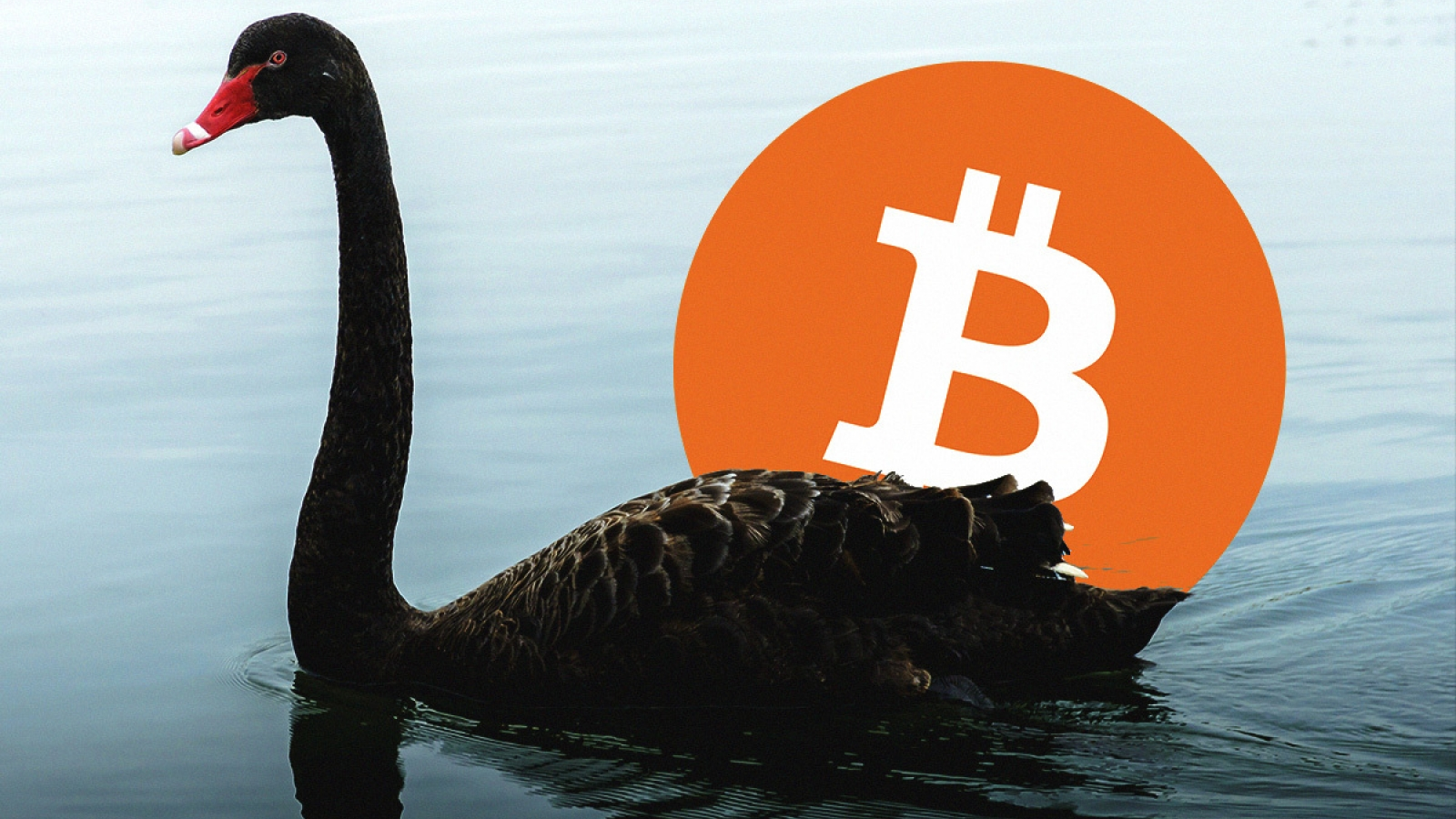 Swan Bitcoin Offers