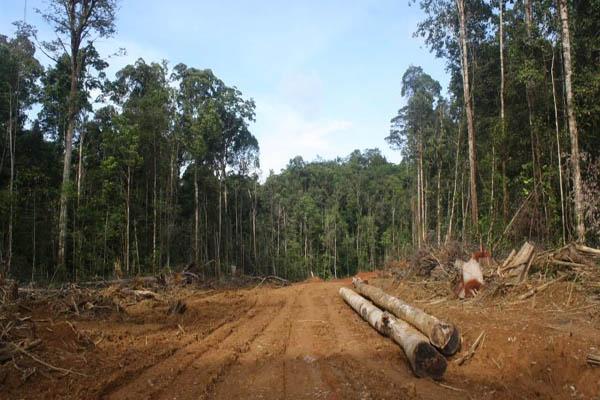 https://i1.wp.com/www.mongabay.co.id/wp-content/uploads/2013/05/Hutan-hutan-keramat-Nabire-yang-dibongkar.jpg