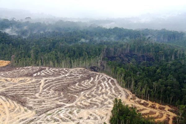 Hutan Kalimantan terus terkikis akibat ekspansi perkebunan kelapa sawit. Foto: Lili Rambe Sumber: Mongabay
