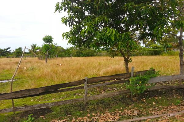 Dulu, lahan ini pagi menguning...kini sungai mengering, irigasi tak mengalir, padipun tak bisa tumbuh lagi. Hanya ilalang kering yang mengisi persawahan itu saat ini. Foto: Sapariah Saturi