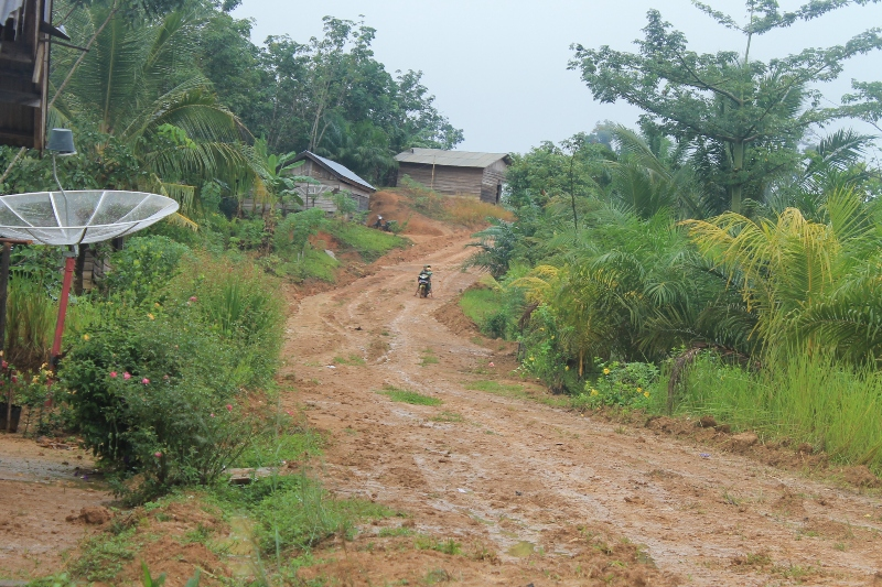 Saat ini sekitar 800 hektar luasan kebun sawit  yang dikelola sekitar 250 kepala keluarga di Dusun Air Kuro. Dusun Air Kuro merupakan habitat gajah di PLG Sebelat. Foto: Taufik Wijaya