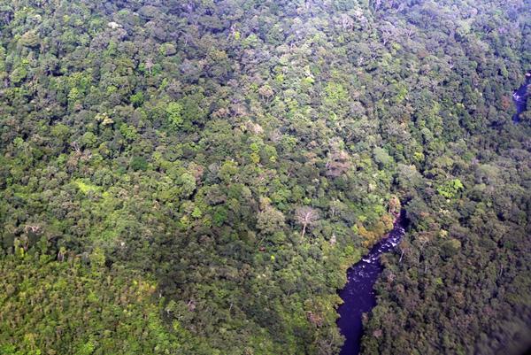 Kawasan hutan hijau di perbatasan Kalimantan Utara (Heart of Borneo). Foto: Hendar