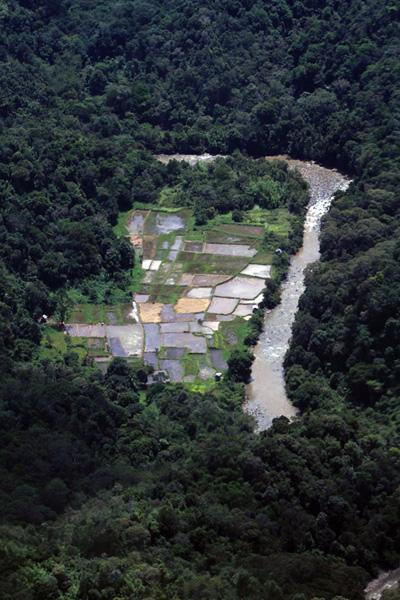 Daerah pertanian di kawasan Desa Long Bawan, Kalimantan Utara. Foto: Hendar