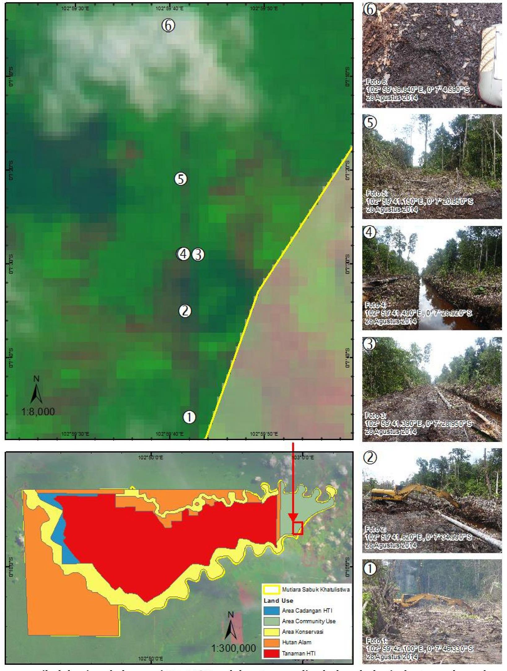 Temuan Jikalahari pada konsesi PT MSK, salah satu supplier bahan baku industri pulp dan kertas SMG/APP di Riau. Gambar 1 dan 2 : alat berat sedang melakukan pembuatan jalan dan penggalian kanal. Gambar 3,4 dan 5 : jalan dan kanal di konsesi PT MSK diperkirakan telah dibuat sekitar lima km dan Gambar 6 : ditemukan jejak harimau sumatera yang menunjukkan bahwa areal konsesi PT MSK merupakan habitat harimau sumatera. Sumber : Jikalahari