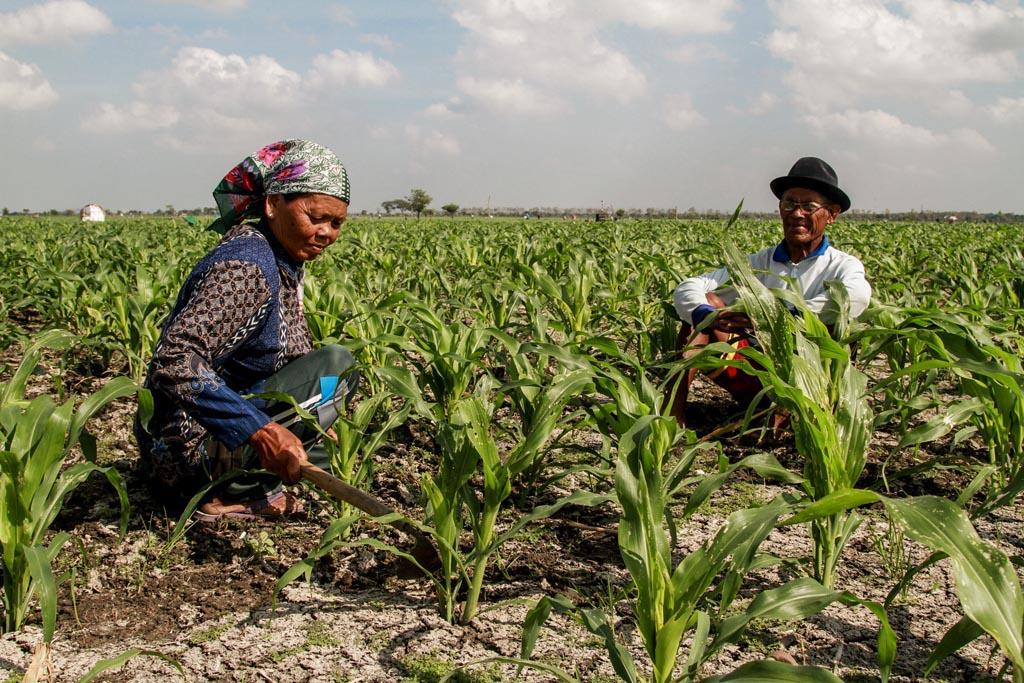 Sosiologi pedesaan dan sosiologi pertanian adalah merupakan dua dari sekian spesialisasi yang ada dalam sosiologi. Dampak Konversi Lahan Pertanian Menjadi Industri – Besar