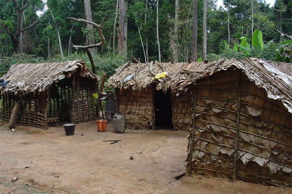 Pygmy house made with sticks and leaves in northern Republic of the Congo.