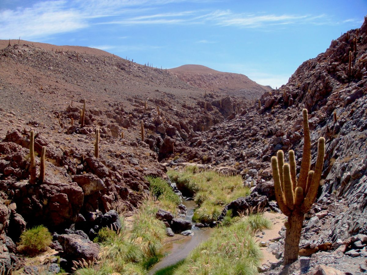 Trekking Guatin ou o passeio ao Vale dos Cactos. Deserto do Atacama (parte final)
