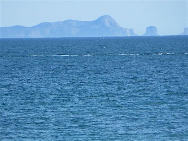 Arquipélago de Alcatrazes, litoral norte SP
