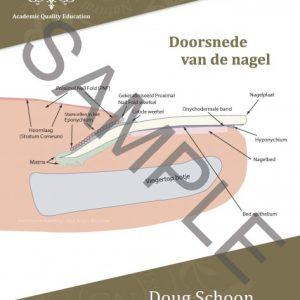 GORGE NAILS | Natuurlijke Nagel Poster
