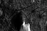 Yggdrasil-by-Monika-K.-Adler