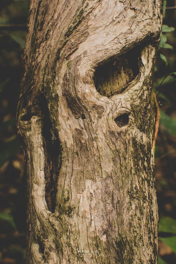 olhos da mata, fotografia autoral
