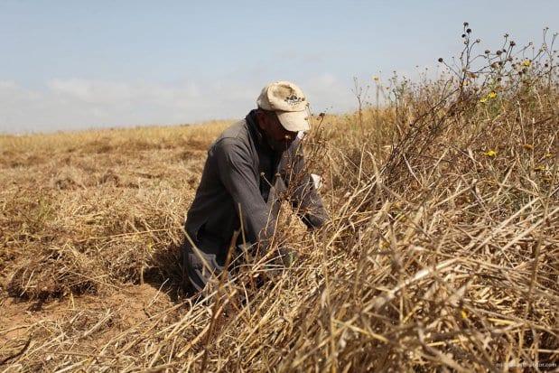 20160518_Israel-damages-gaza-crops-agriculture-7