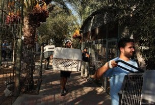 Gaza-Zoo-animals-08