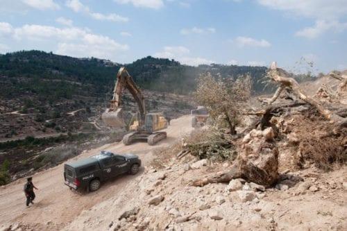 Las Fuerzas de Seguridad israelíes arrancan olivos en Cisjordania / Fuente: Danya Mustafa