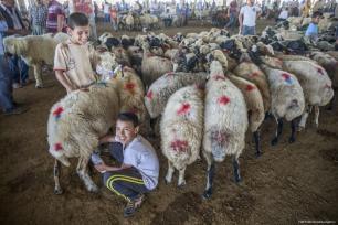 Los niños juegan con una oveja en un mercado de ganado mientras continúan los preparativos para el próximo Eid al-Adha en Sanliurfa, Turquía el 18 de agosto de 2017 [Halil Fidan / Agencia Anadolu]