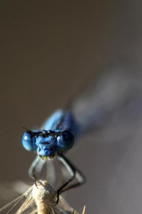 Una libélula come mosquitos en el distrito de Gevas en Van, Turquía, 8 de agosto de 2018 [Ali İhsan Öztürk / Agencia Anadolu]